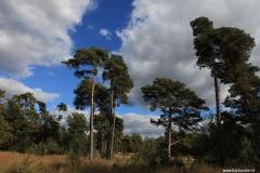 Brabant-Fotografie-heide-natuur-natuurgebied-kampina1