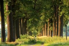 Brabant-Fotografie-laan-kasteel-heeswijk