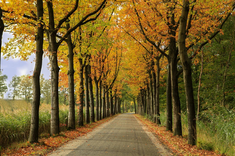 Herfst in Berlicum, hooghei (c) Bart Coolen