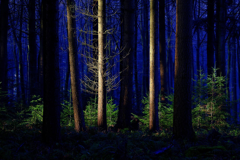 speulderbos veluwe netherlands-forest-wilderness-nature-landscape-national park (c) bart coolen