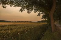 Nederlands, nederland, brabant, meierij, zonsondergang, lente (c) Bart Coolen