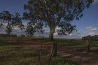 Barossa Valley, Eden Valley, Adelaide, wine, Australia, Australia, Bart Coolen (c) 2019