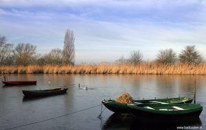 Brabant-Fotografie-Biesbosch.jpg