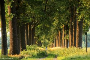 Brabant-Fotografie-laan-kasteel-heeswijk.jpg
