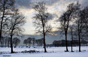 Berlicum-fotografie-buitengebied-paarden.jpg