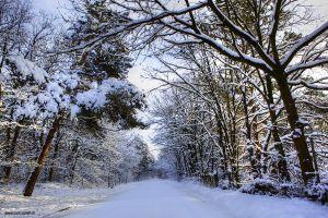 Berlicum-winter_fotografie-c7.jpg