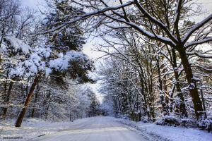 Berlicum-winter_fotografie.jpg