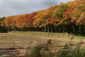 herfst-Berlicum3_MG_3767.jpg