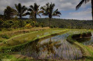 Indonesia-Bali-Munduk01.jpg