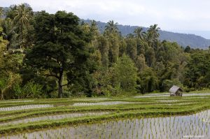 Indonesia-Bali-Munduk03.jpg