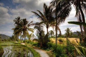 Indonesia-Bali-landscape-Munduk-countryside.jpg