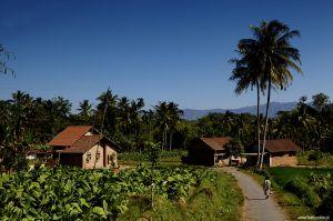 Indonesia-Kalibaru-Java-farm-house017.jpg