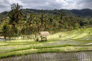 Indonesia-Munduk202.jpg