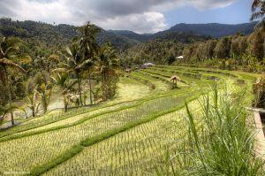 Indonesia-Munduk209.jpg