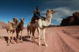 Jordan-Wadi-Rum-Camels-driver.jpg