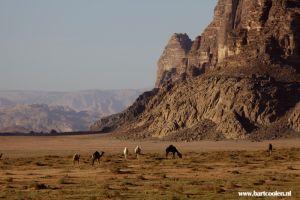 jordan-travel-amman-petra-wadi-rum3.JPG