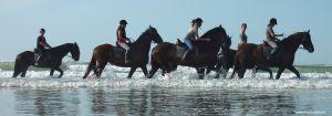 Terschelling-paarden-strand-waddenzee.jpg