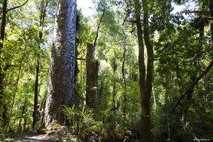 Nieuw-Zeeland-New-Zealand03.jpg